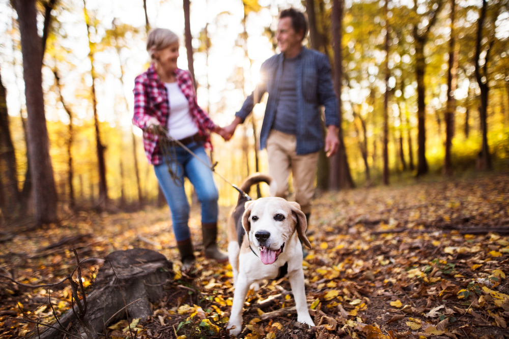5 Fall Activities Your Dog Will Love