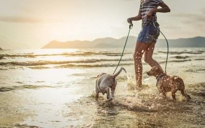 8 Fun Activities to do With Your Dog This Summer