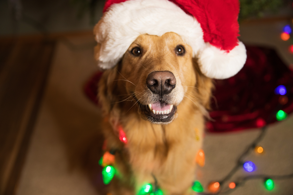 Tips to Prepare Your Dog for the Holidays