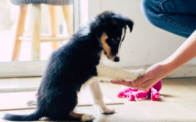 A Training Guide for New Puppy Owners