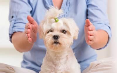 Energy Healing Involving Your Dog