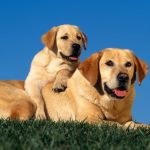 best dog beds for labs
