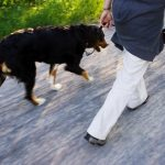 Exercising With Your Arthritic Dog