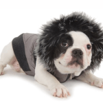 Wintertime Precautions for Senior Dogs