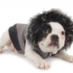 Wintertime Precautions for Senior Dogs