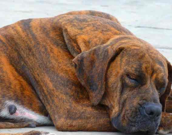orthopedic dog bed 7