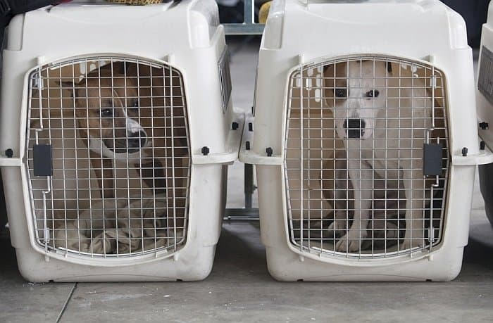Best crates for large dogs 4