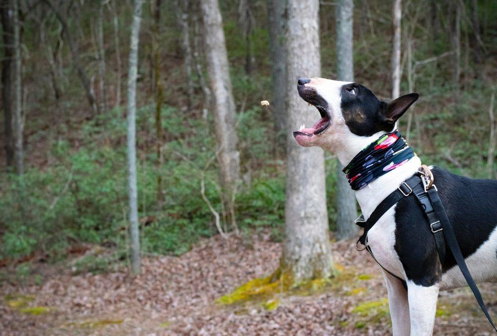 How to Train a Dog to Heel in 7 Steps