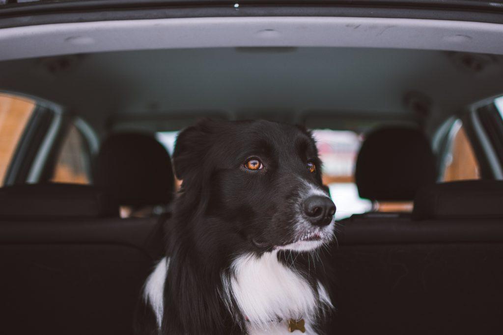 Best Dog Car Harnesses