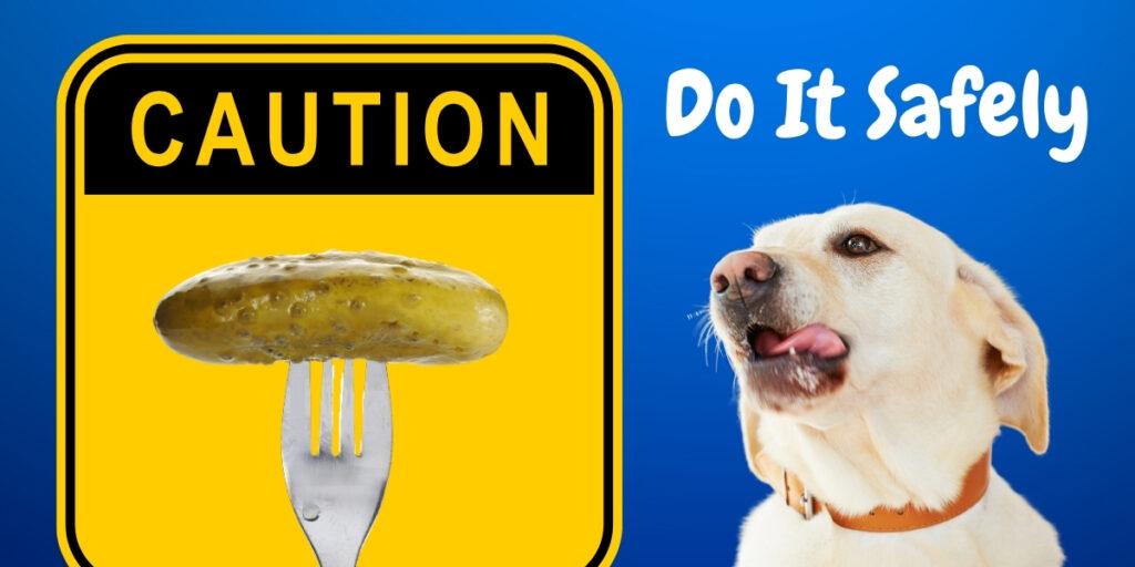 Feed Your Dog Pickles Safely