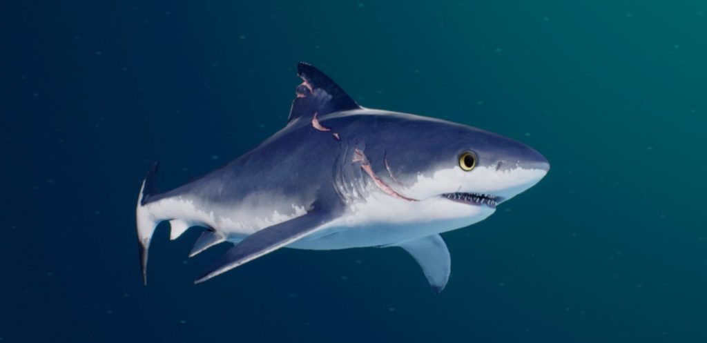 The baby shark you start the game with, shown in the evolution menu.