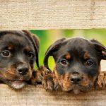 Rottweiler Training Tips Tricks Canna Pet