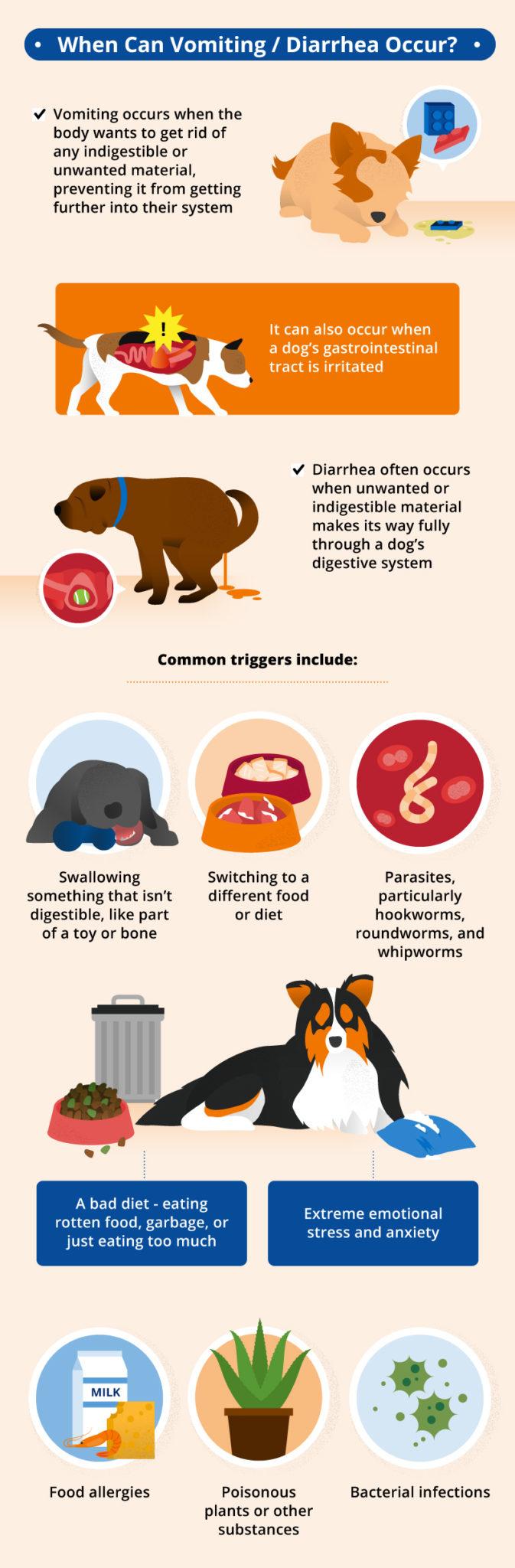 Ibs In Dogs Best Food