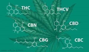 Cannabinoide Übersicht 300x175 - Phytocannabinoide