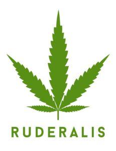 Cannabis Ruderalis 231x300 - CBD (Cannabidiol)