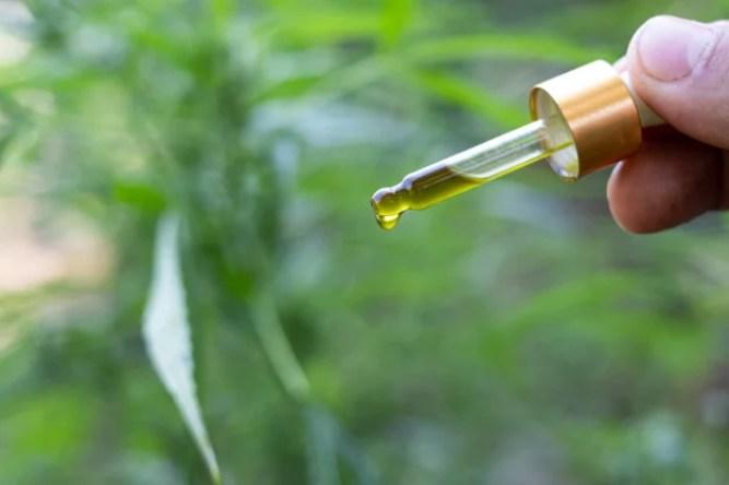 CBD et la douleur ,Une main qui tient un compte-goutte d'huile de CBD,