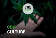 une main tenant une feuille de cannabis, matière première pour avoir du CBD