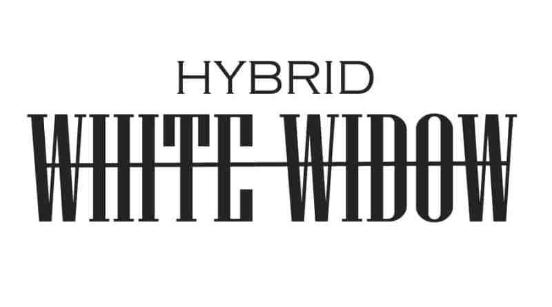 white widow hybrid informationen fakten thc gehalt cbd gehalt. Black Bedroom Furniture Sets. Home Design Ideas
