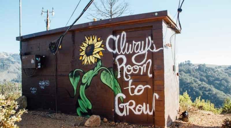 Urban Chili Growbox – Erfahrungsbericht