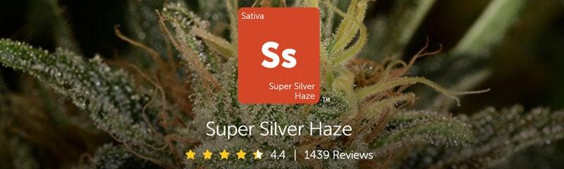 leafly Super Silver Haze