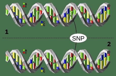 DNA SNP