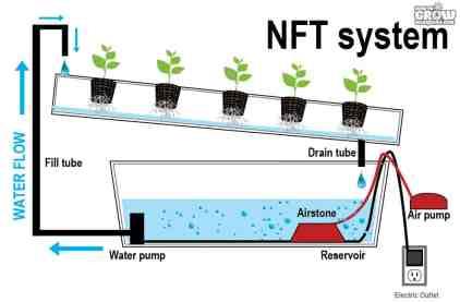 NFT - Nährstoff-Film-Technik hydroponischer Cannabis-Anbau