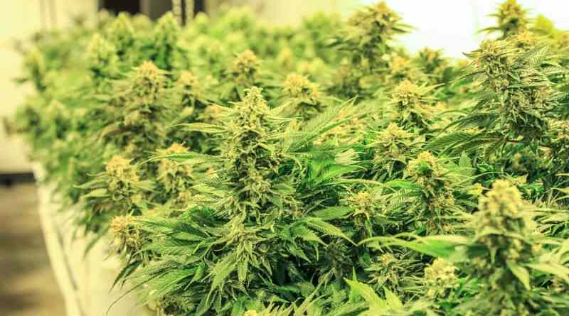 Hydrokultur und Aeroponik: Übersicht geschlossener Anbausysteme für Cannabis