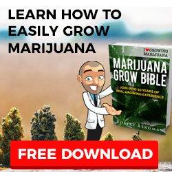 Grow Cannabis Seeds In Australia