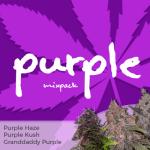 Purple Seeds Mixpack