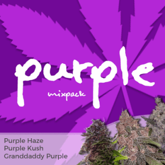 Purple Mixpack Cannabis Seeds