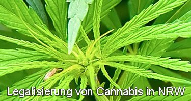 Cannabis Legal in NRW