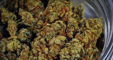 Verkauf von Cannabis auf Erfolgskurs
