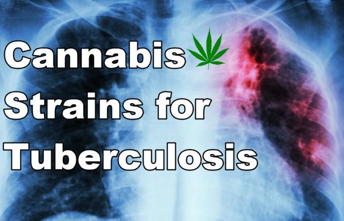 CANNABIS FOR TB