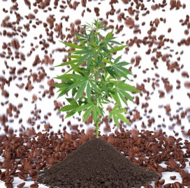 coffee grounds to grow weed