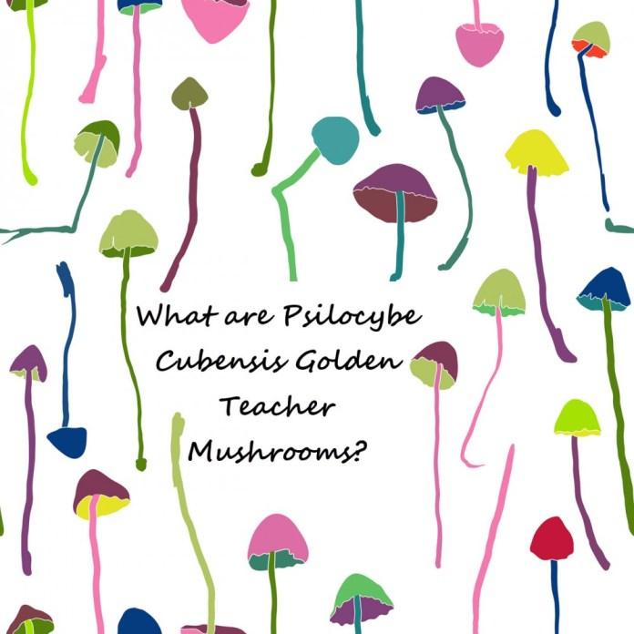 WHAT ARE TEACHER MUSHROOMS