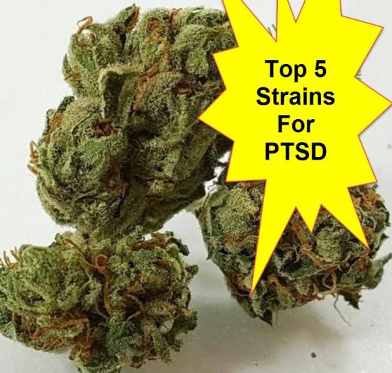 PTSD STRAINS