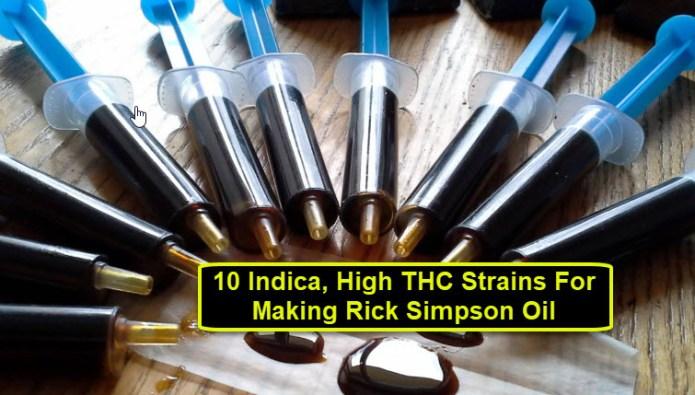 HIGH THC CANNABIS STRAINS FOR RICK SIMPSON OIL