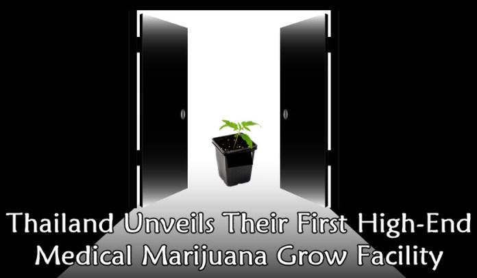 Thailand grow facilities for marijuana