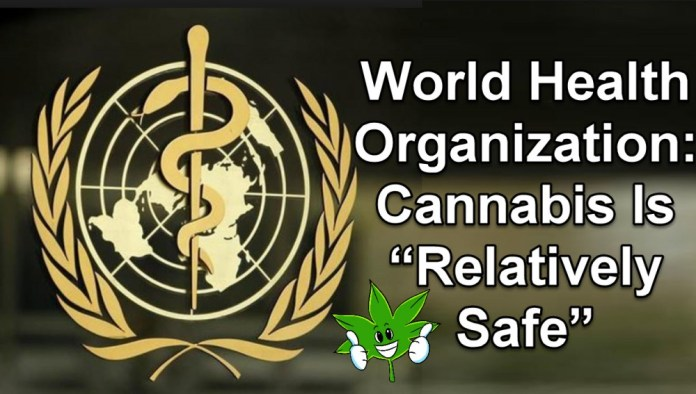 WHO ON CANNABIS SAFETY