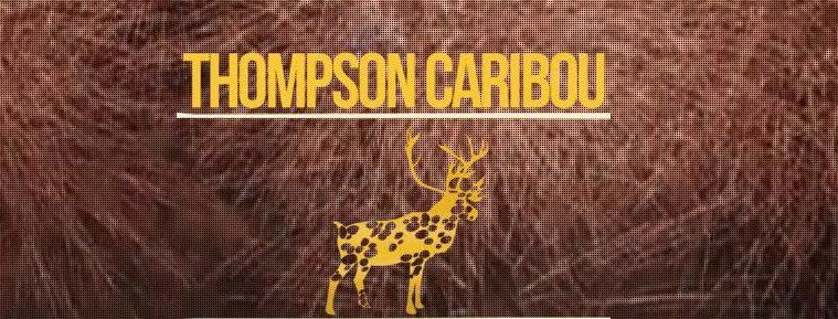 thompson caribou