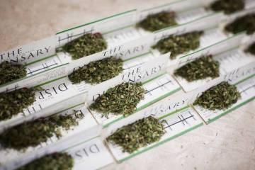 cannabis control tmcd