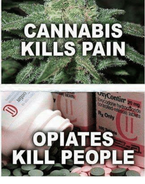 opioid addiction treat with cannabis