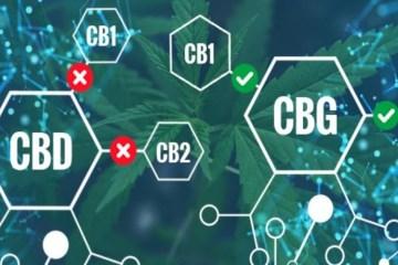 Can CBD and Cannabigerol (CBG) create A Cannabinoid Powerhouse?