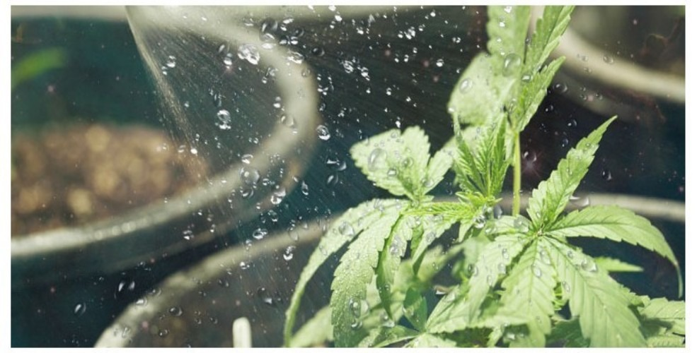 Cannabis Nutrients: Regulating Plant Food thumbnail