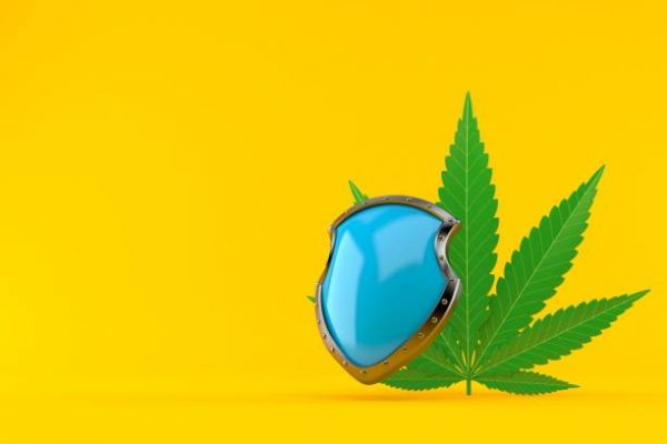 insurance cannabis