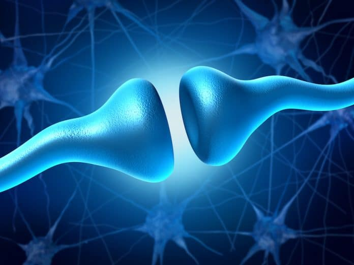 CBD and THC neuroactivity