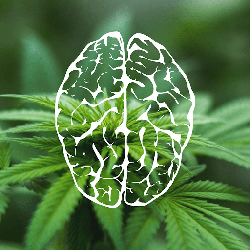 CBD and THC effect on brain