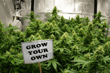At-home Grow Tips