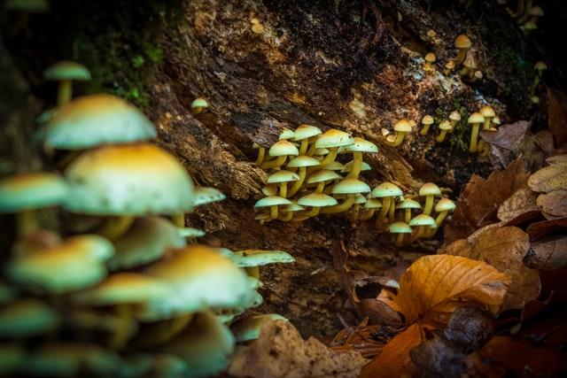 magic mushroom stocks