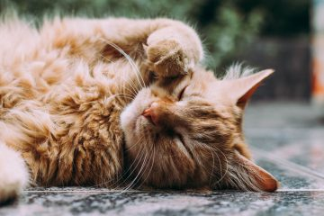 CBD Oil for Cats With Anxiety — Does It Really Work?